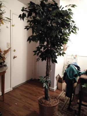 Atificial tree and plant for Sale in Lexington, KY