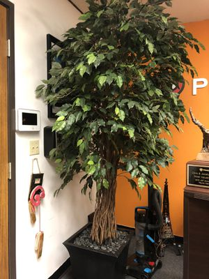 Large Decoration plant for office- High Quality for Sale in San Diego, CA
