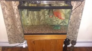 Fish and fish tank for Sale in Waterbury, CT