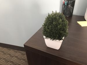 Fake plant $5 or trade for Sale in Las Vegas, NV
