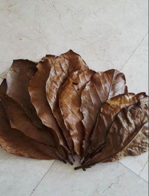 "30:7"" + Organic Almond (Sun Dried) Leaves. $5 for Sale in Miami, FL"