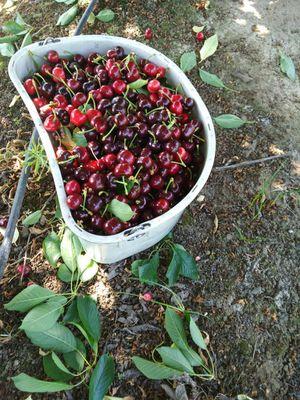 vendo botes de cherry for Sale in Lodi, CA