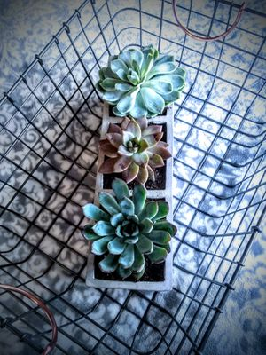 Succulent decor for Sale in Spring, TX