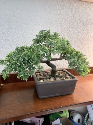 Fake plant for Sale in Ontario, CA