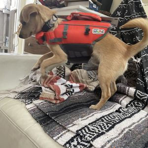 Dog Life vest XS for Sale in San Diego, CA