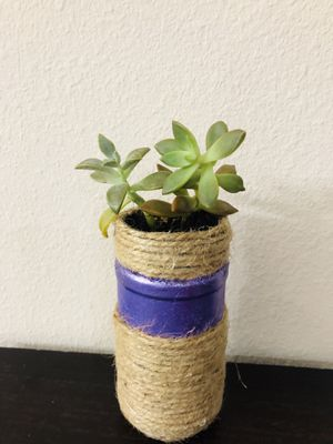 Succulents for Sale in Kissimmee, FL