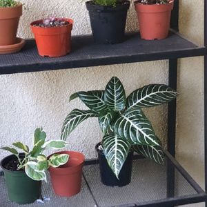 Metal Plant Stand for Sale in Costa Mesa, CA