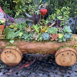 Succulent En Carreta for Sale in Bell Gardens, CA