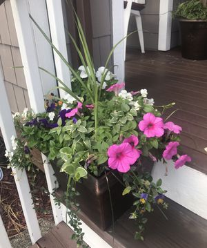 Excellent flowers 🌺 planters for Sale in Renton, WA