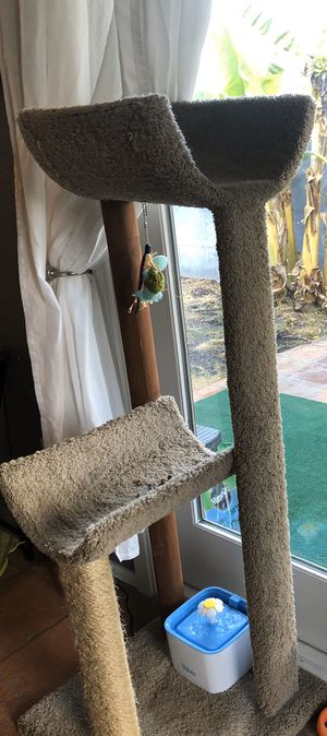 Free cat tree! for Sale in Scottsdale, AZ