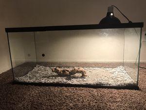 Reptile Tank + Heat Lamp + 2 Bulbs for Sale in Riverside, CA