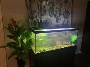 75 gallon aquarium and stand for Sale in Spring, TX