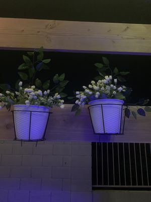 Fake 2 plant for Sale in Surprise, AZ