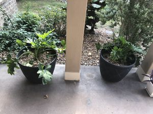 Tropical potted plants for Sale in Kirby, TX