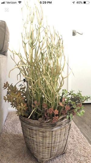 Large succulent for Sale in Palos Verdes Peninsula, CA