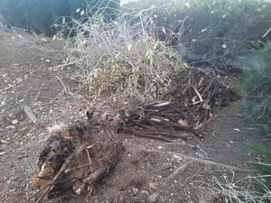 Free firewood and kindling!! for Sale in Victorville, CA
