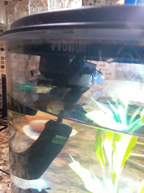 KollerCraft Aqua View 360 2 Gallon Aquarium