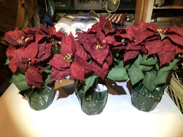 Christmas Pointsetta Plants (fake)