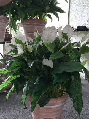 Artificial Plastic Lily Plants In Terra-cotta Clay Pot for Sale in Alafaya, FL