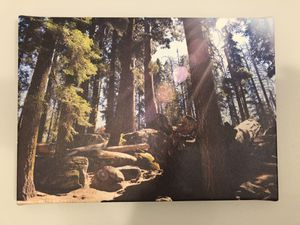 Sequoia National Park - canvas photo for Sale in Tinton Falls, NJ