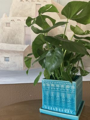 """8"""" Teal Plant Pot w Drainage Tray for Sale in San Diego, CA"""