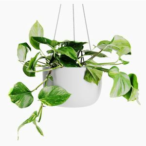 New Hanging Planter 8 inch (White) - Ceramic Hanging Pots for Plants - Ceiling & Wall - Flower Pot Outdoor & Indoor Hanging Plant Holder, $25 Or Best for Sale in Los Angeles, CA