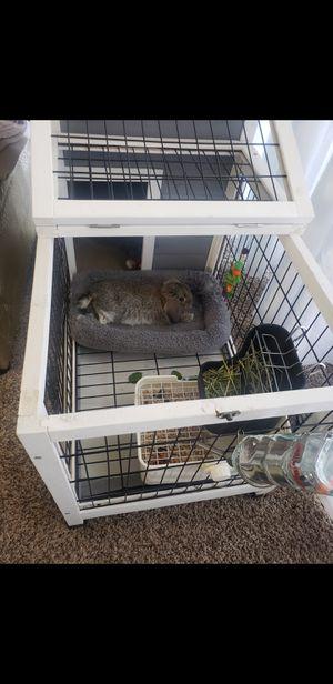 *FREE* Lop Rabbit for Sale in Chula Vista, CA