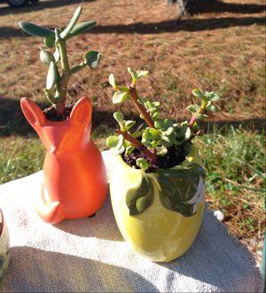 Sassy succulents for Sale in Chesapeake, VA