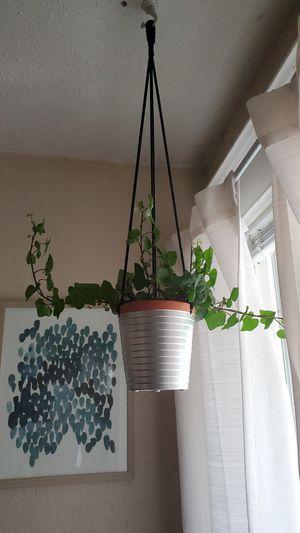 Hanging plant for Sale in Denver, CO