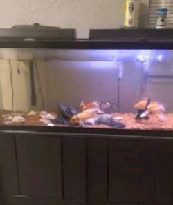Fish Tank for Sale in Shady Hills,  FL