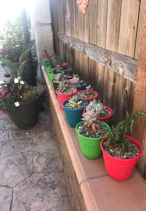Just Succulents for Sale in Chula Vista, CA