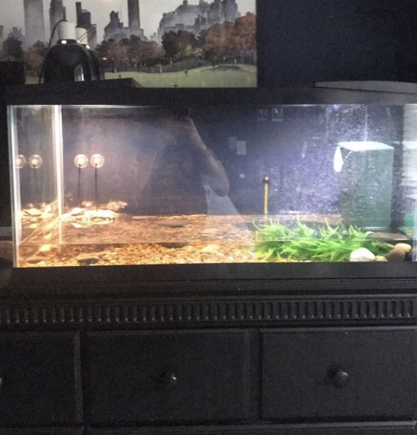 40 gallon fish tank with filter