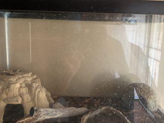 Leopard Geckos for Sale in San Diego,  CA