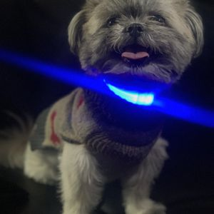 Nylon LED Pet Dog Collar Night Safety Flashing Glow In The Dark Dog Leash Dogs Luminous Fluorescent Collars Pet Supplies for Sale in East Los Angeles, CA