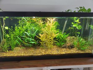 75 gal Fresh water planted aquarium everything included for Sale in St. Cloud, FL