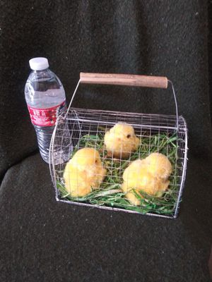 3 (not real) Easter chicks in a wire cage with handle for Sale in Riverside, CA