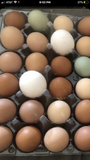 Fertilized chicken eggs for sale $5 per dozen $5.50 if I provide the crates We have Orphington, Cochin, Rhode Island red, Plymouth rock, Americana an for Sale in Norco, CA