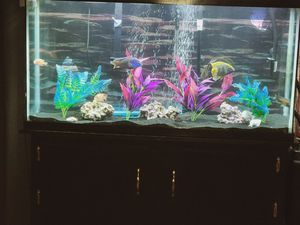60 gallon fresh water fish tank for Sale in Pinellas Park, FL