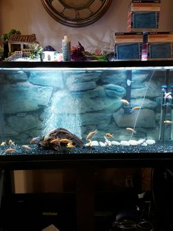 60-Gallon Fish Tank for Sale in Puyallup,  WA