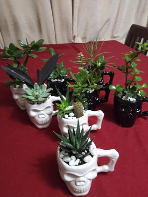 Succulents en calaberitas de cerámica pequeños$5Each for Sale in South Gate, CA
