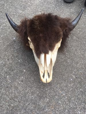 Bison Skull for Sale in Lacey, WA