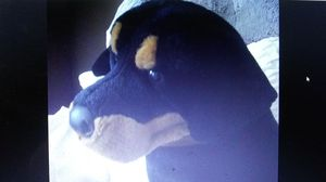 Big realistic Rottweiler Stuffed Toy for Sale in MD, US