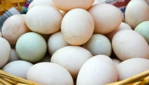 Mixed breed duck eggs for Sale in White Plains, MD
