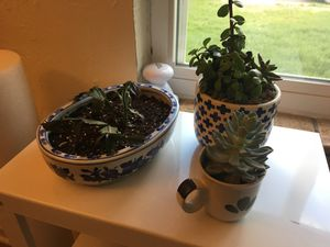 succulents for Sale in Englewood, CO