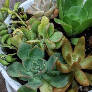 Assortment Of Potted Succulents for Sale in Los Angeles, CA