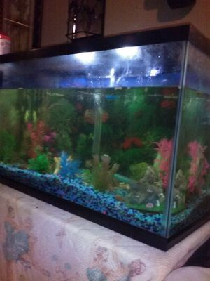 Fish tank for Sale in Knoxville, TN
