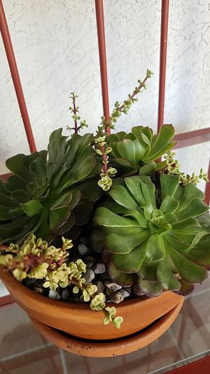 TERRACOTTA POTTED SUCCULENTS WITH PEBBLES for Sale in Chula Vista, CA