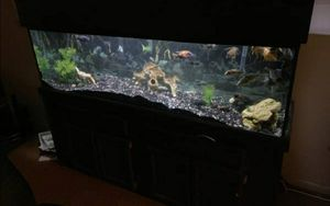 Need a 150 gal fish tank for Sale in Nampa, ID