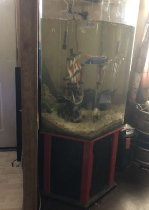 Fish tank must go for Sale in Buckeye, AZ