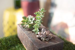 Succulent Brick for Sale in Somerville, MA